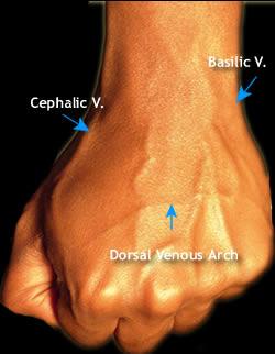 cephalic vein in wrist – applecool, Cephalic Vein