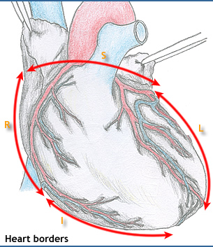 Heart borders anatomy